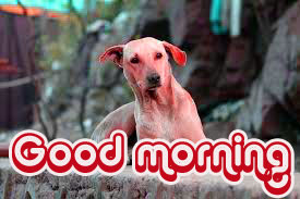 Friend Good morning Wishes Images Photo Pics HD Download
