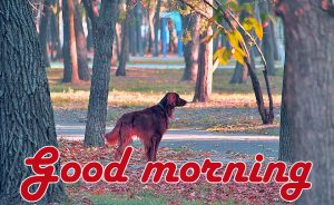 Best Friend Good morning Wishes Images Wallpaper Pics Download