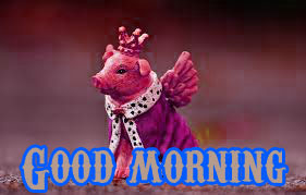 Funny Good Morning Wishes Images Photo HD Download