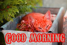 Funny Good Morning Wishes Images Photo Pictures HD Download