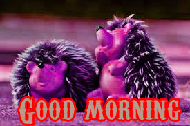 Funny Good Morning Wishes Images Wallpaper Pics Download