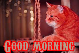 Funny Good Morning Wishes Images Photo Pictures Pics Download
