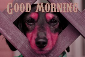 Funny Good Morning Wishes Images Photo Pics Free Download
