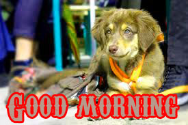 Funny Good Morning Wishes Images Photo Pictures Download