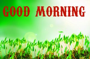 Beautiful Good Morning Images Pictures HD Download