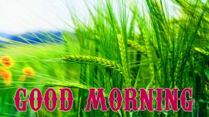 Beautiful Good Morning Images Photo HD Download