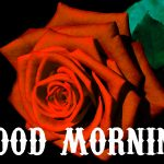 156+ Beautiful Good Morning Images HD Download