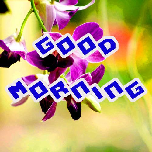 Good Morning 3D Images Pics HD