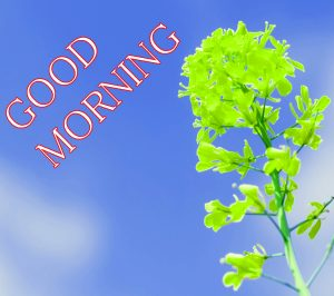 Good Morning Images Photo Wallpaper Pics