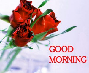 Good Morning Images Photo Wallpaper With Red Rose
