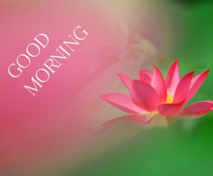 Good Morning Images Wallpaper Pics New Best