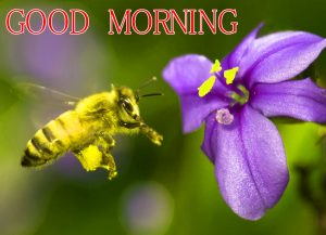 Good Morning Images Wallpaper Pics Download for fb