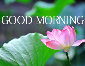 Good Morning Images Wallpaper Pictures Free