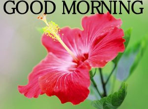 Good Morning Images Wallpaper Photo Pics HD
