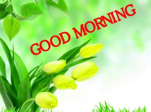 Good Morning Images Pictures Wallpaper Pics