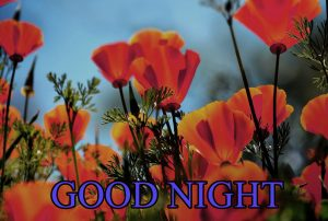 Beautiful Good Night Wishes Images Pics Free Download