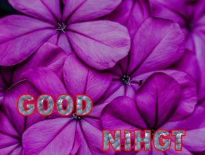 Beautiful Good Night Wishes Images Wallpaper Pics for Whatsapp