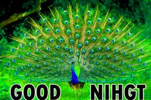 Beautiful Good Night Wishes Images Wallpaper Pics Free Download