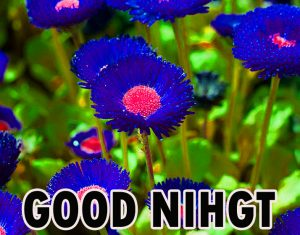 Beautiful Good Night Wishes Images Wallpaper Pics Download for Whatsapp
