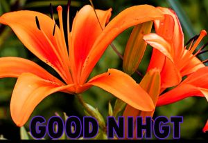 Beautiful Good Night Wishes Images Wallpaper Pic for Whatsapp
