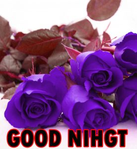 Beautiful Good Night Wishes Images Wallpaper Pics With Rose