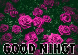 Beautiful Good Night Wishes Images Wallpaper for Whatsapp
