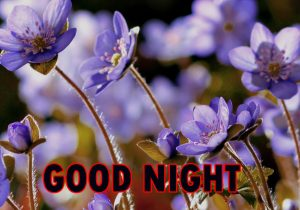 Beautiful Good Night Wishes Images Wallpaper With Flower
