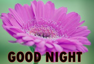 Beautiful Good Night Wishes Images Wallpaper Pictures Download