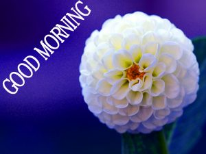 Good Morning Images Wallpaper Pics for Whtasapp