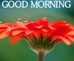 Good Morning Images pics HD Free Download