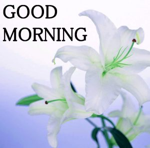 Good Morning Images Photo Wallpaper Pics Free