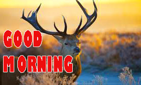 Gd mrng Wishes Images Wallpaper Pics Free Download