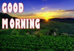 Gd mrng Wishes Images Pictures photo HD Download