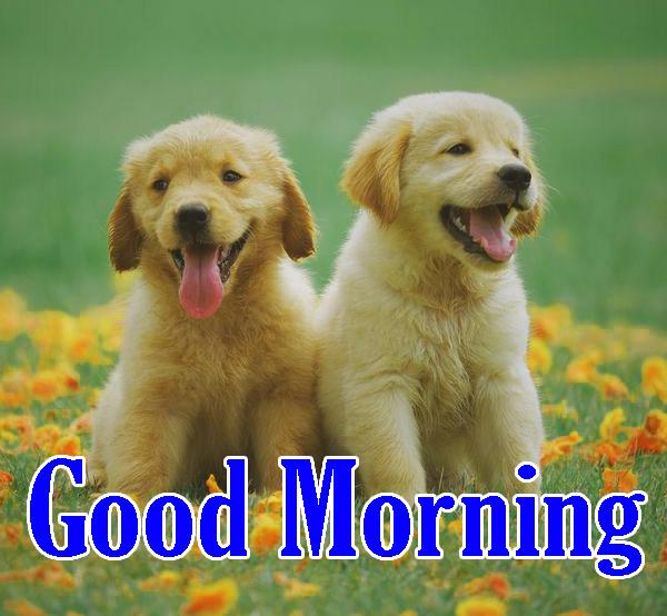 Animal Good Morning Pics for Whatsapp