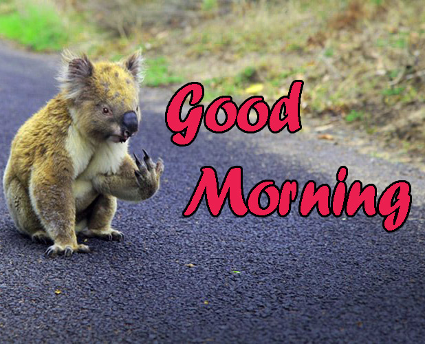Animal Good Morning Wallpaper Download