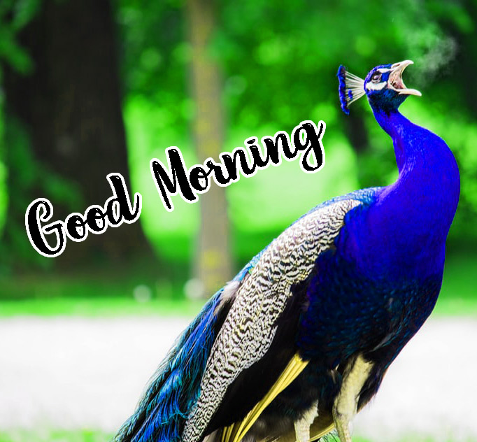 Animal Good Morning Pics HD