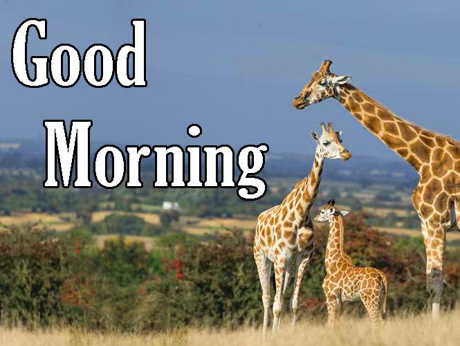 Animal Good Morning Wallpaper Free HD