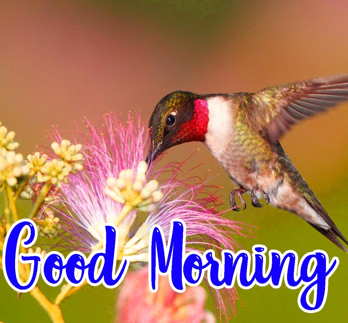 Animal Good Morning Pics Free Download