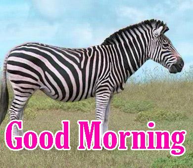Animal Good Morning Pics Download