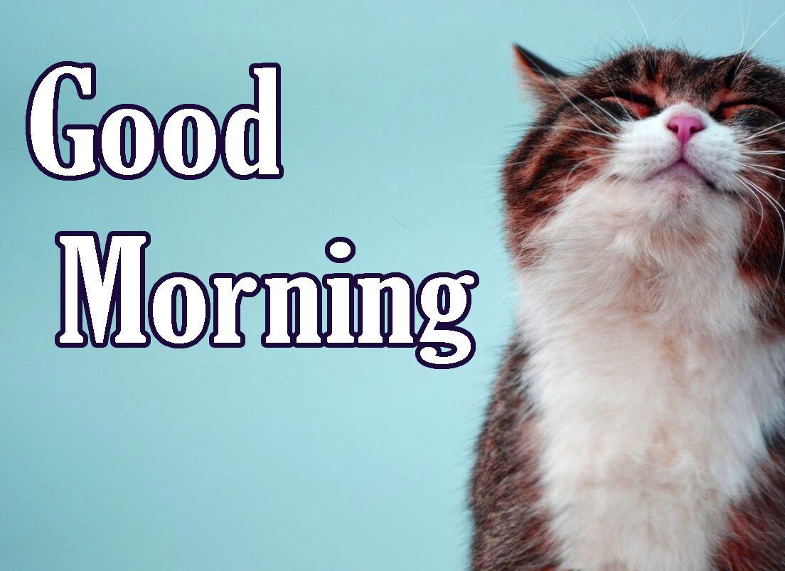 Animal Good Morning Wallpaper for Whatsapp