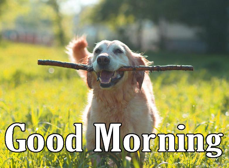 Animal Good Morning Photo for Facebook