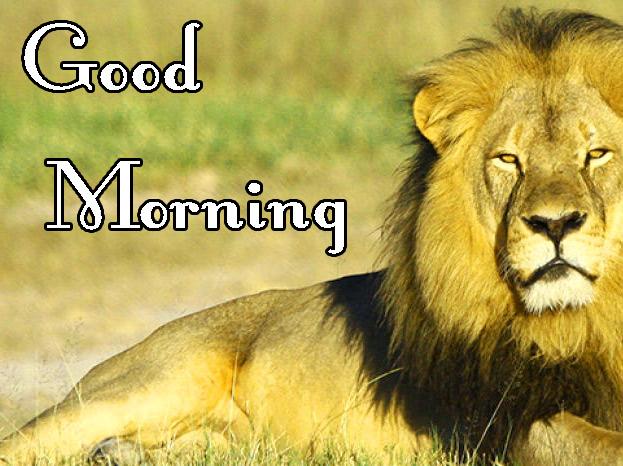 Animal Good Morning Pics Free