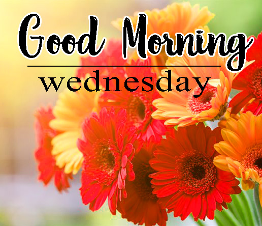 Good Morning Wednesday Wallpaper Download