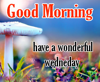 Good Morning Wednesday Pics Free In HD