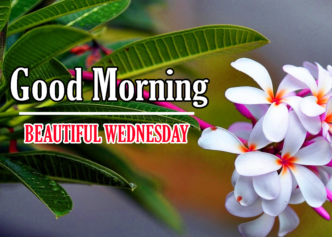 Good Morning Wednesday Pics Free Download