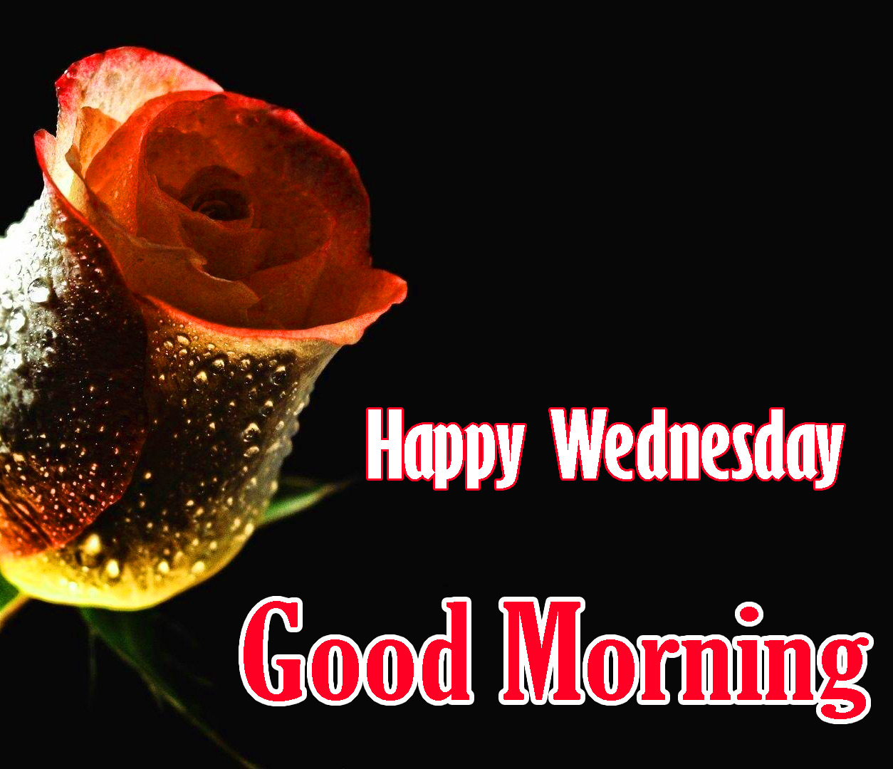 Good Morning Wednesday Images With Red Rose