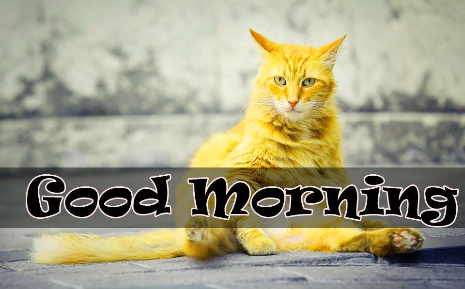 Funny Good Morning  Images Wallpaper free