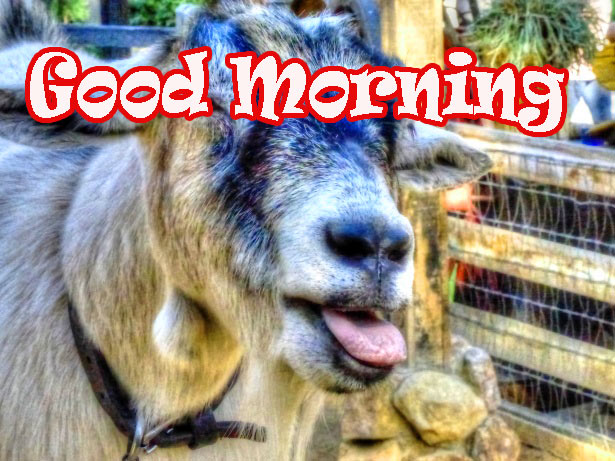 funny good morning 8