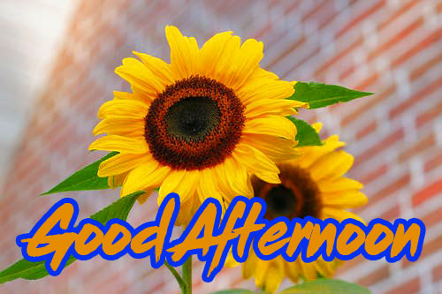 Good Afternoon Images Wallpaper Pics Free