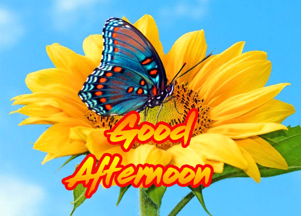 Good Afternoon Images Wallpaper pics HD